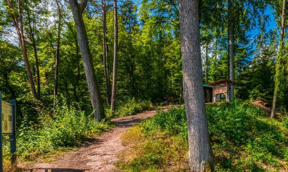Gourmet Trail and Premium Hiking Trail Water-Forest and Meadow Path Calw - Bad Teinach-Zavelstein